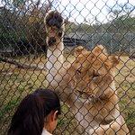 Wildlife Safari Foto