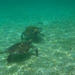 Lankayan Island Dive Resort Foto