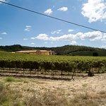 Cirulli - Aziende Agricole Photo