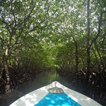 Mangroves tour!