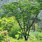 Jardin Albert Khan