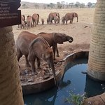 Sarova Salt Lick Game Lodge Foto