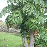 Plantas de origen autóctono