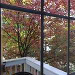 The Baxter's balcony in October