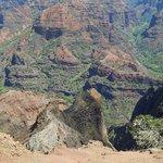 Waimea canyon from the ground