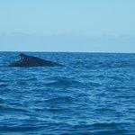 la balena