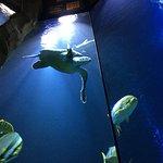 Haus des Meeres - Aqua Terra Zoo
