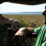 Photo of Cheetah Tented Camp