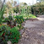 Some of the raised beds in the children's garden