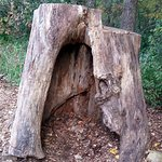 Hollow stump