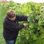 Raisins pour la production tardive