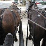 Les chevaux de Camille .....................