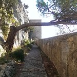 The pathway to the Citadelle - Love the tree