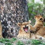 Cheetah Plains Foto