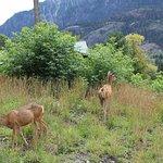 Deer near the falls