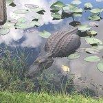 Foto de Everglades Safari Park