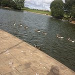 Lovely birds at the boating lake. They eat out of your hand and you can buy bird feed from the b