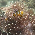 Bubba Diving Phuket