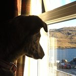 even the dog loved the view