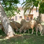 Agroturismo Es Quatre Cantons Photo