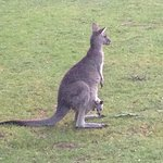 Kangaroos which came right up to the front of the apartment. The kids were thrilled to see a joe