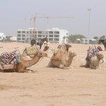 Your camel awaits