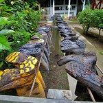 Nature Lodge Kinabatangan Foto