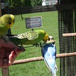 Feeding Parakeets was fun for me. Loved the tickle feeling of them walking on my hand and arm.