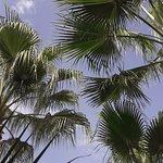 Magnifiques palmiers au centre du pation