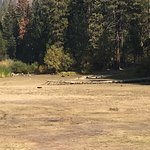 Dried up Hume Lake...my dog is in the middle of the dried up lake.