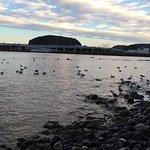 Photo de 1547018