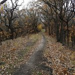 Trails for hiking, riding bike or horse