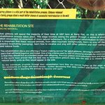 Gibbon Rehabilitation Project Foto