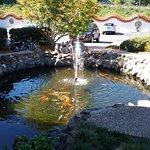 Koi pond at the entrance