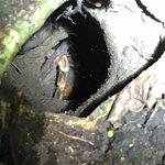 tarantula nest