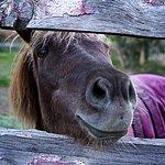 Friendly horses and pony