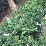 garden along