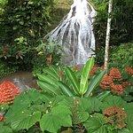 Shaw Park Gardens & Waterfalls Foto