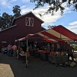 Patrick Ranch Barn with Pumpkins for Sale