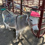 Paint a Donkey! Fun for the kids
