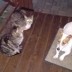 Jack Russel and two of the cats