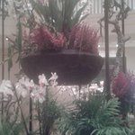 Lovely orchids in the lobby area