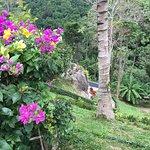 Foto de Paradise Park Farm