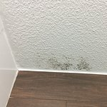Mildew on bathroom ceiling - second room was far worse