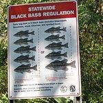 Suwannee River State Park Foto