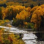 Dolores River Golden Corridor