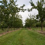 Apple orchards.