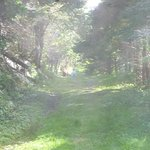 Foto de Acadian Trail