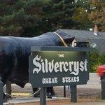 Zdjęcie The Silvercryst
