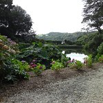 Photo de Trebah Garden